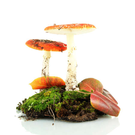 red amanitas with moss isolated on white Stock Photo - 17052022