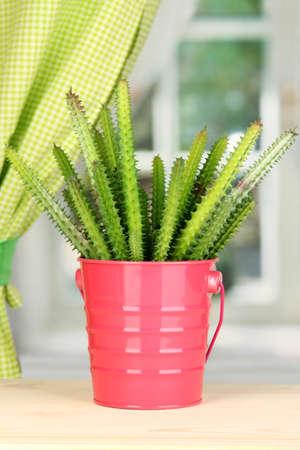 Cactus in pot on windowsill photo