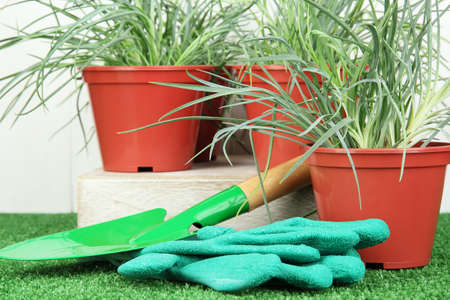 pots with seedling on green grass on wooden background Stock Photo - 17053265