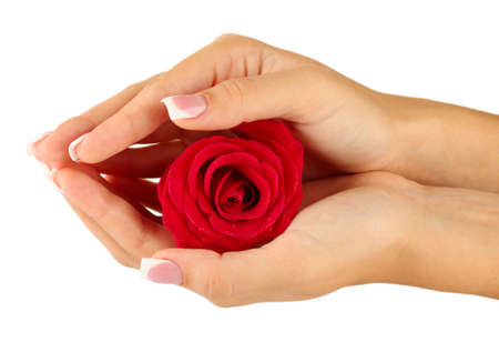 Red rose with hands on white background photo