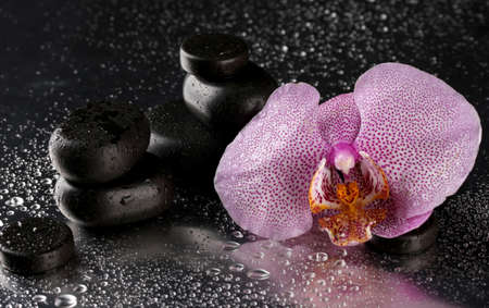 Spa stones and orchid flower, on wet grey background  photo