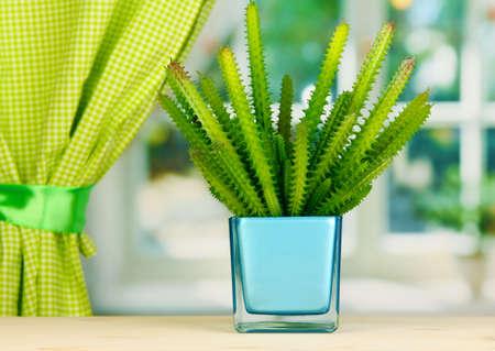 Cactus in vase on windowsill photo