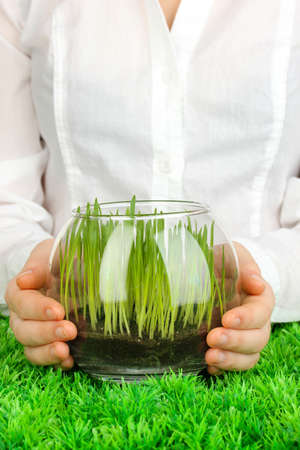 Hands holding glass vase with growing grass photo