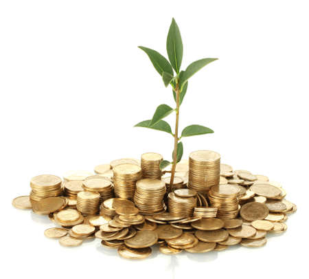 make an investment: plant growing out of gold coins isolated on white
