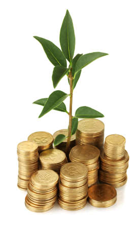 plant growing out of gold coins isolated on white Stock Photo - 17139714
