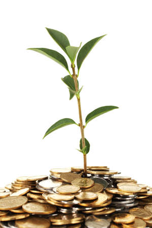 plant growing out of gold and silver  coins on white background close-up photo