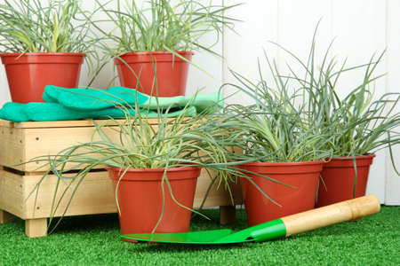 pots with seedling on green grass on wooden background photo