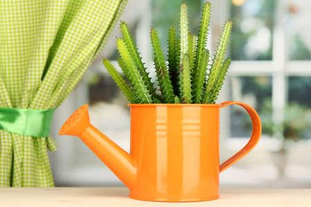 Cactus in watering can on windowsill photo