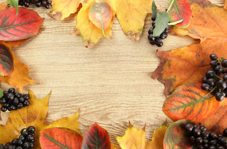 bright autumn leaves and wild berries, on wooden background photo