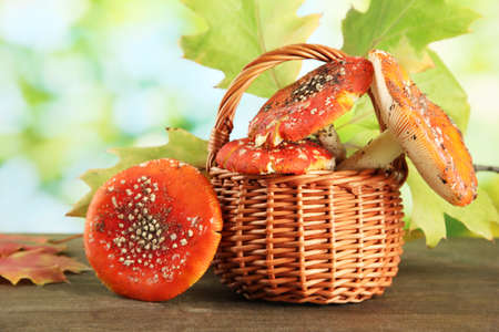 red amanitas in basket, on green background photo