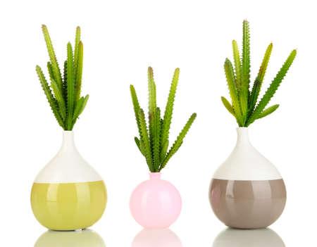 Cactuses in vase isolated on white photo