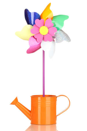 Colored pinwheel in watering can isolated on white photo