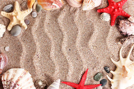 Beach with a lot of seashells and starfish Stock Photo - 17292740