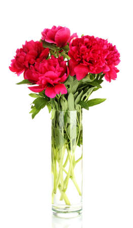 beautiful pink peonies in glass vase with bow isolated on white Stock Photo - 17291289