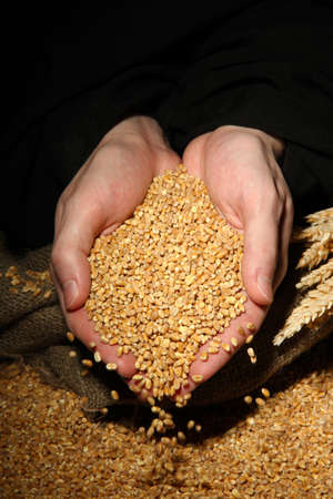 man hands with grain, on black background photo