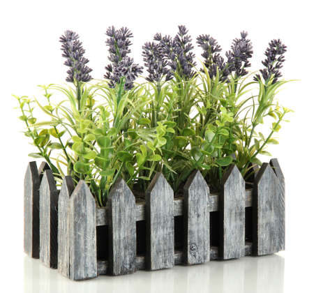 Decorative lavender in wooden box isolated on white Stock Photo - 17348450