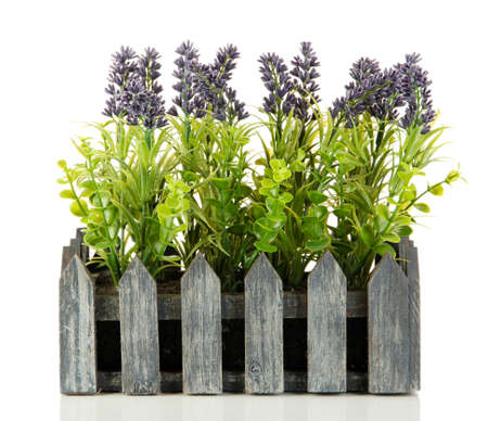 Decorative lavender in wooden box isolated on white Stock Photo - 17348443