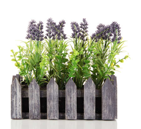 Decorative lavender in wooden box isolated on white Stock Photo - 17477083