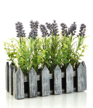 Decorative lavender in wooden box isolated on white Stock Photo - 17476990