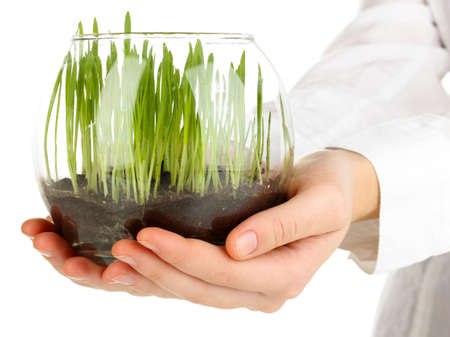 healthy growth: Hands holding glass vase with growing grass isolated on white Stock Photo