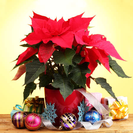 Beautiful poinsettia with christmas balls and presents on wooden table on yellow background photo