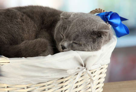 Sweet cat close-up photo