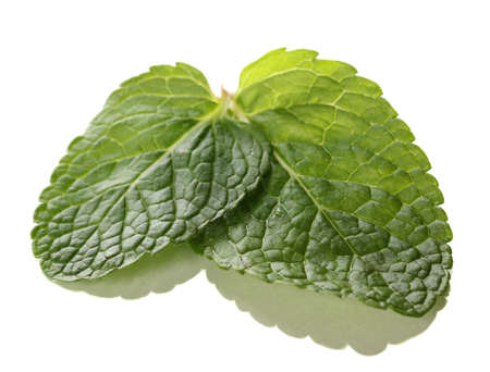 Mint isolated on white Stock Photo - 17541234