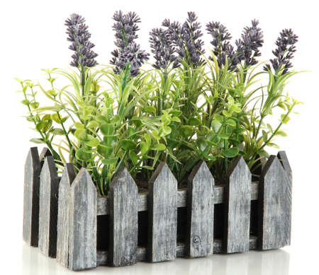 Decorative lavender in wooden box isolated on white Stock Photo - 17578283