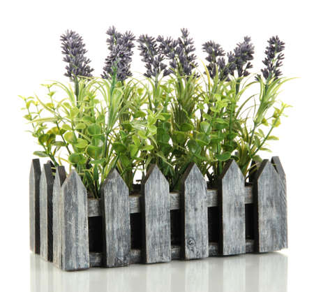 Decorative lavender in wooden box isolated on white Stock Photo - 17676785
