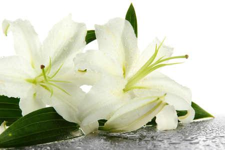 lirio blanco: Hermoso lirio, aislados en blanco Foto de archivo