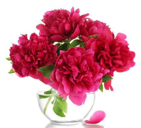 beautiful pink peonies in glass vase isolated on white photo