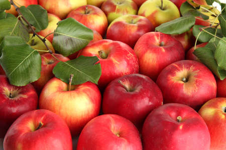 heap up: juicy red apples with green leaves, close up