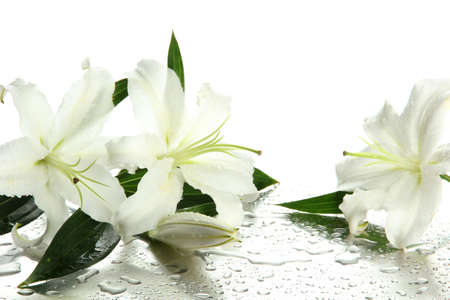 lirio blanco: Hermoso lirio, aislado en blanco