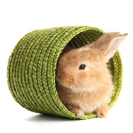 Fluffy foxy Kaninchen im Weidenkorb isoliert auf weiß Standard-Bild