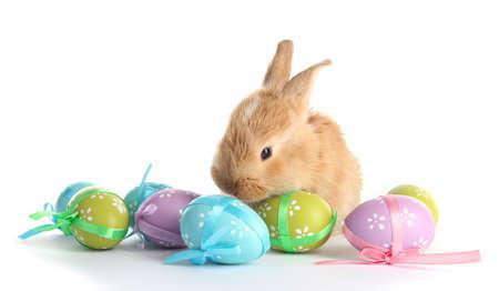 conejo: Conejo astuto Fluffy con huevos de Pascua aislados en blanco Foto de archivo