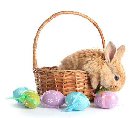 small basket: Fluffy foxy rabbit in basket with Easter eggs isolated on white