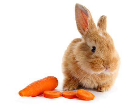 Fluffy foxy rabbit with carrot isolated on white Stock Photo - 18628527