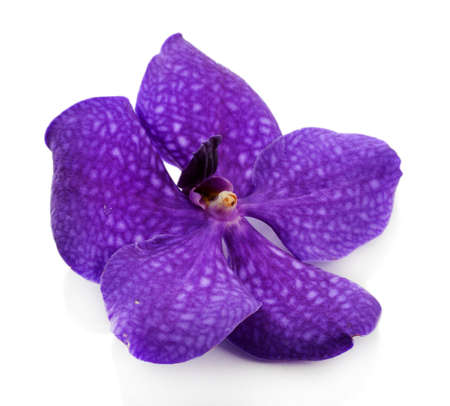 violet: Purple orchid flower, isolated on white