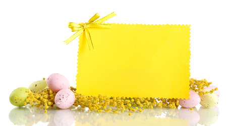 Empty card with easter eggs and mimosa flowers, isolated on white photo