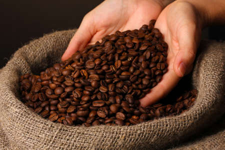 coffee harvest: Coffee beans in hands on dark background Stock Photo