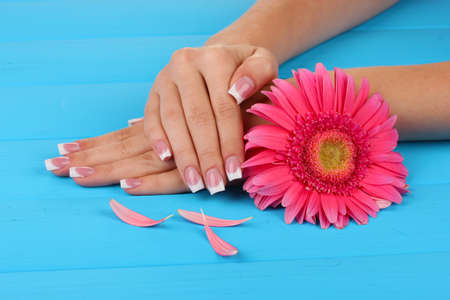 Woman hands with french manicure and flower on blue wooden background Stock Photo - 18776546