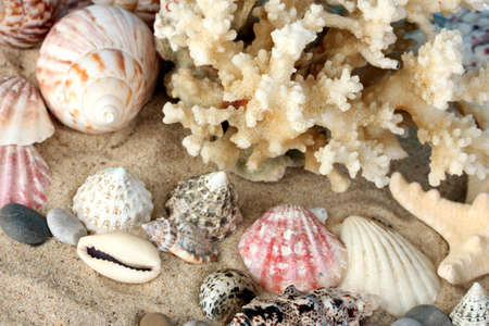 goniopora: Sea coral with shells close-up