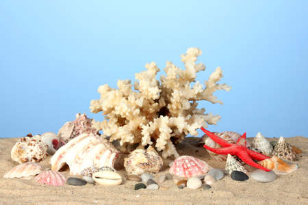 Sea coral with shells on blue background close-up Stock Photo - 18921264