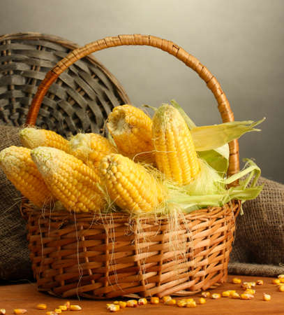 corn kernel: fresh corn in basket, on wooden table, on grey background
