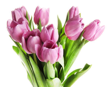 Beautiful bouquet of purple tulips, isolated on white photo