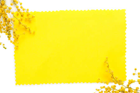 mimosa: Twigs of mimosa flowers and empty card, isolated on white