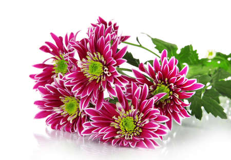 Bouquet of beautiful chrysanthemums isolated on white photo