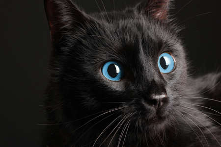 black cat: Black cat on black background
