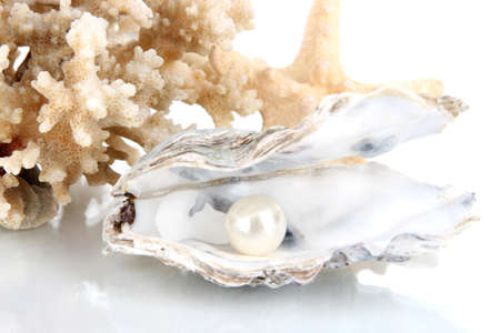 corall: Open oyster with pearl isolated on white