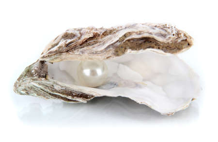 oyster shell: Open oyster with pearl isolated on white